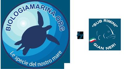 Biologia marina del Mediterraneo