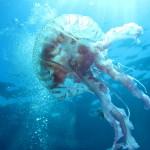 medusa luminosa 19 150x150 Medusa luminosa