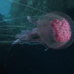 medusa luminosa 27 150x150 Medusa luminosa