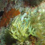 alga-cava-11