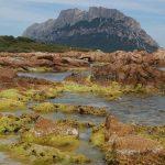 alga chetomorfa 03 150x150 Alga chetomorfa