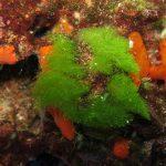 alga-erba-08