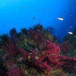 cernia 44 150x150 Epinephelus marginatus   Cernia bruna