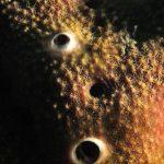 ircinia pelle a rete 12 150x150 Spugna ircinia pelle a rete