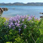iris azzurro 14 150x150 Iris azzurro