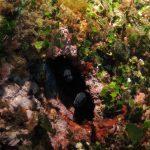 murena coabitazione 31 150x150 Murena in coabitazione