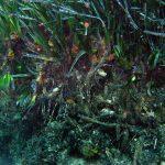 Posidonia oceanica matte