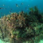 posidonia matte 32 150x150 Posidonia oceanica matte