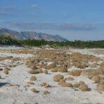 posidonia residui 07 150x150 Posidonia oceanica residui a terra egagropili e banquettes
