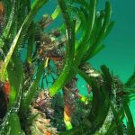 posidonia rizomi 07 150x150 Posidonia oceanica rizomi