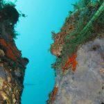 scorfano rosso 22 150x150 Scorpaena scrofa   Scorfano rosso