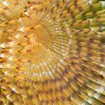 spirografo spallanzani 08 150x150 Sabella spallanzani   Spirografo spallanzani