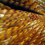 spirografo spallanzani 31 150x150 Sabella spallanzani   Spirografo spallanzani