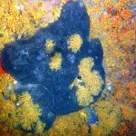 spugna blù 01 150x150 Terpios caerulea   Spugna blu