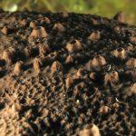 spugna nera spinosa 33 150x150 Spugna nera spinosa