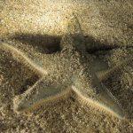 stella platiacanto 24 150x150 Stella platiacanto