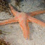 stella-spinosa-grande-23