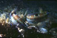 a2417 Ecologia marina