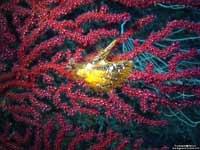 molluschi 095 Simbiosi