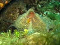 molluschi 3291 Catena alimentare