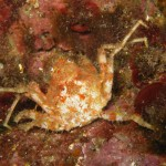 Crostaceo 07