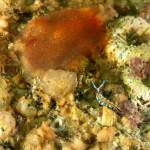 ascidia vene rosse 65 150x150 Ascidia rubrotinta   Ascidia a venature rosse