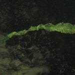 ulva fasciata 01 150x150 Ulva fasciata