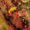 Aglaia delle canarie