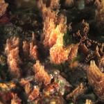 Clatrina rete marrone