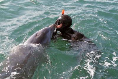 Delfino tursiope